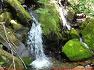 59좌, 정선 가리왕산, 장구목이골 이끼폭포 주목군락지 가리왕산 중봉 삼거리 자연휴양림-요산회
