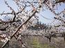 아산 봄나들이 가볼만한곳 매화꽃 향기 가득한 아산 정매원