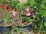포항성모병원의 유월, 꽃이 있는 풍경