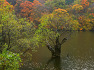 경북 청송트레킹/주왕산 주산지&절골계곡-그 깊어가는 가을속으로...【19년11월3일】
