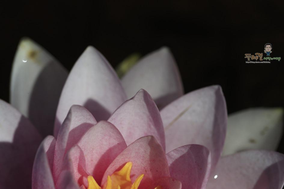 벌써 수련이 곱게 핀 경남 고성 상리연꽃공원