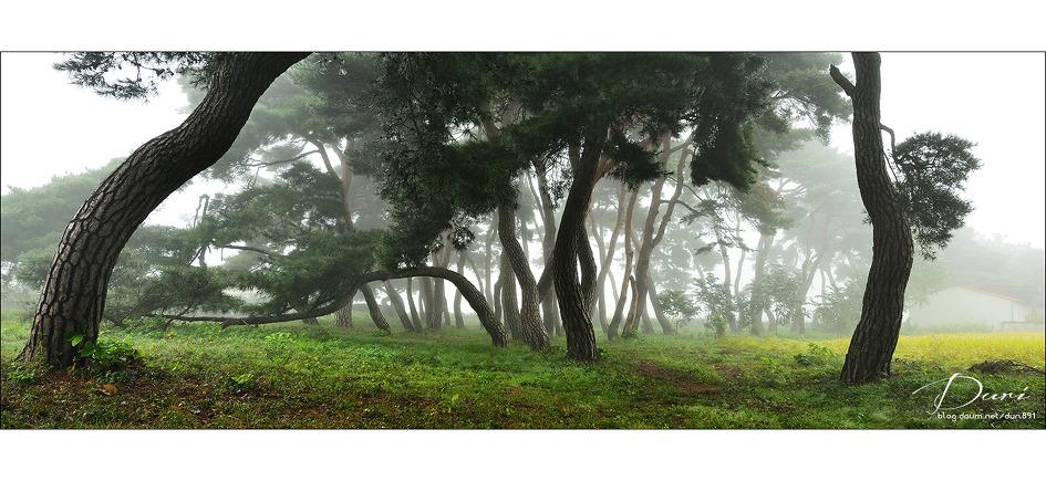 임한리 솔숲