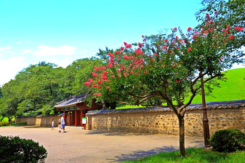 대릉원 배롱나무꽃