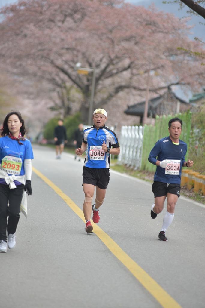 2019 영천댐 벚꽃마라톤대회 주로(11:26 ~